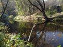 Uklidněné vody Svitavy pod Bílovicemi.