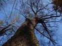 Opadané stromy na břehu Svitavy pod Adamovem.
