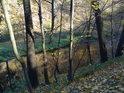 Podzimní břeh Svitavy pod násypem silnice.