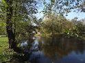 Olše na břehu Svitavy v Obřanech si zachovávají zelené listy ještě na počátku listopadu.