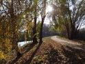 Nádherné polední Slunce mezi břízami na břehu Svitavy.