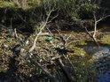 Naplavené větve zadržují naplavený odpad.