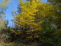 Žlutý podzim v prameništi Svitavy.